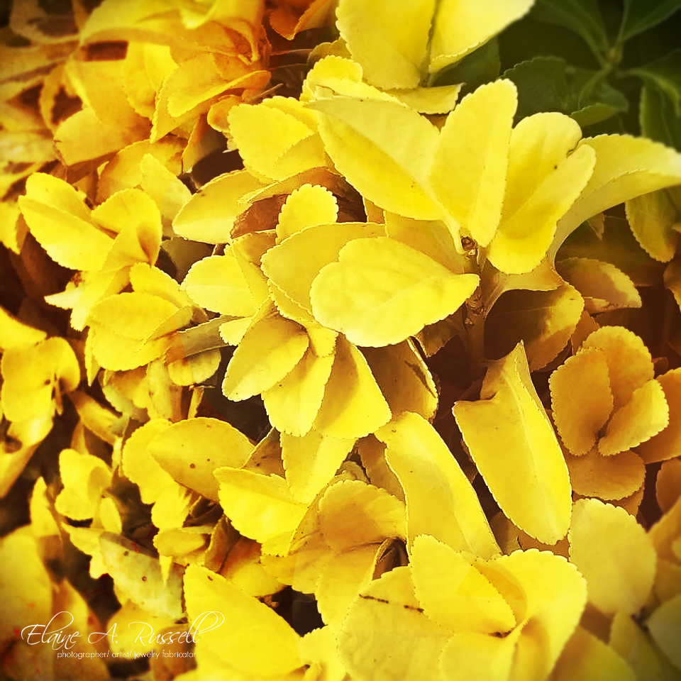 YellowLeaves2.jpg