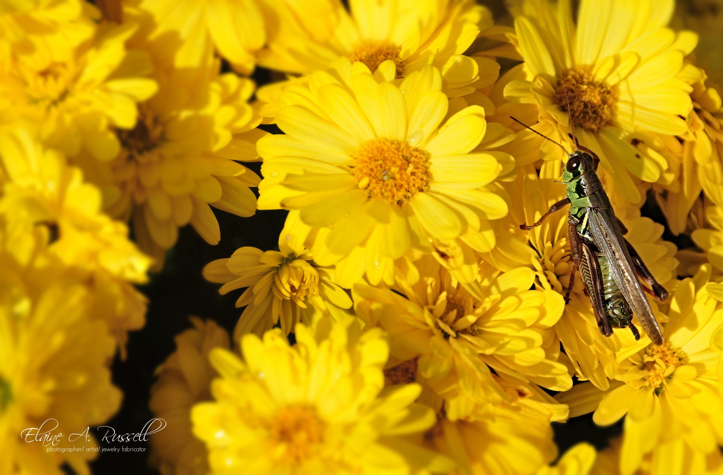 grasshopper2.jpg