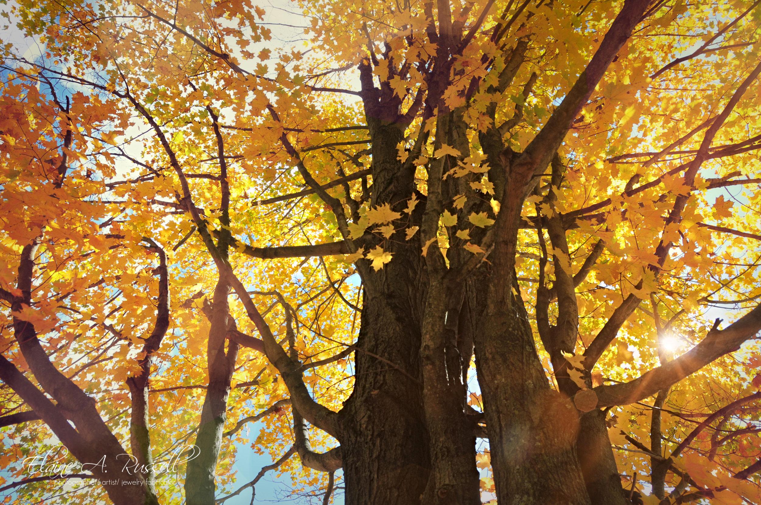 trees2 (1).jpg
