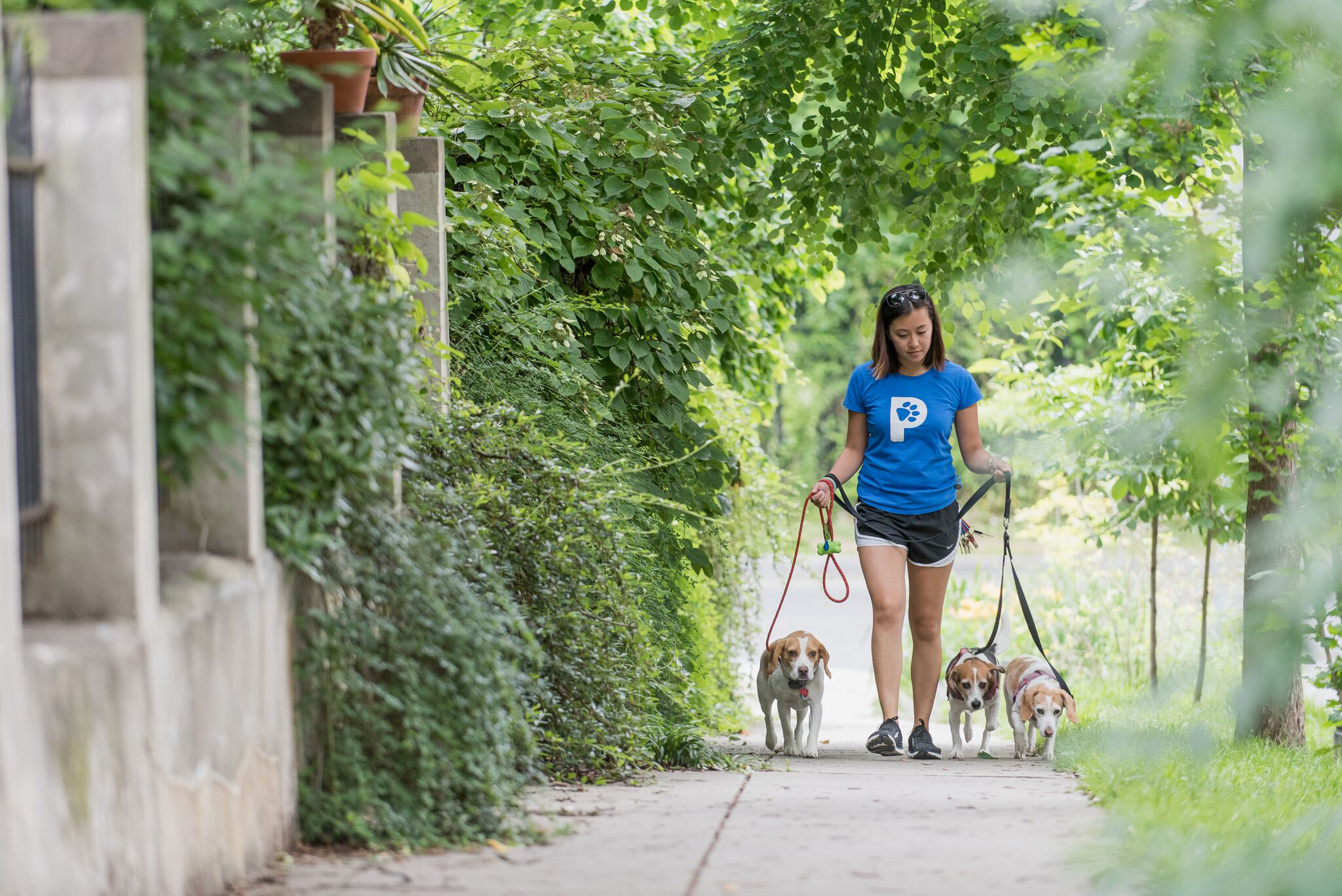 - Paws will host walking meet-and-greets in the heart of cuffing season: neighborhood hotspots.