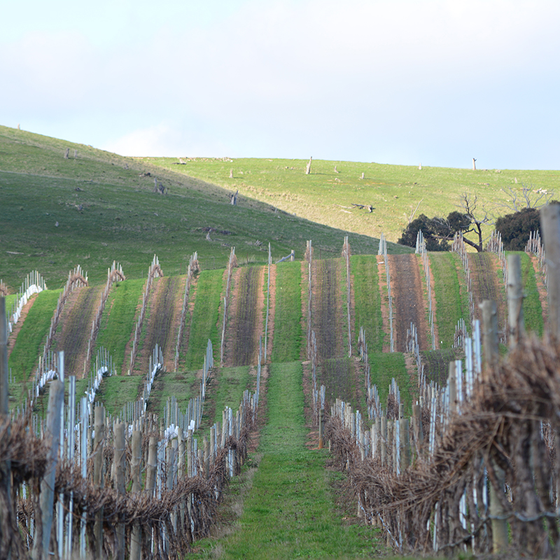 VINEYARD-SCENE-2-web.jpg