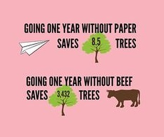 Did you know....?! Think about how many trees and cows you could save over a lifetime 🌱🐂 #veganism #environmentallyfriendly #saveourplanet #crueltyfree
