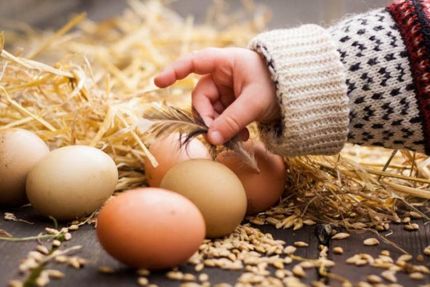 """Vi har 15 forskellige hønseracer, og jeg vil godt påstå, at hver eneste race har sin helt egen smag og karakteristik. Både i ægget og i kødet"""" - — Johanne Schimming"""