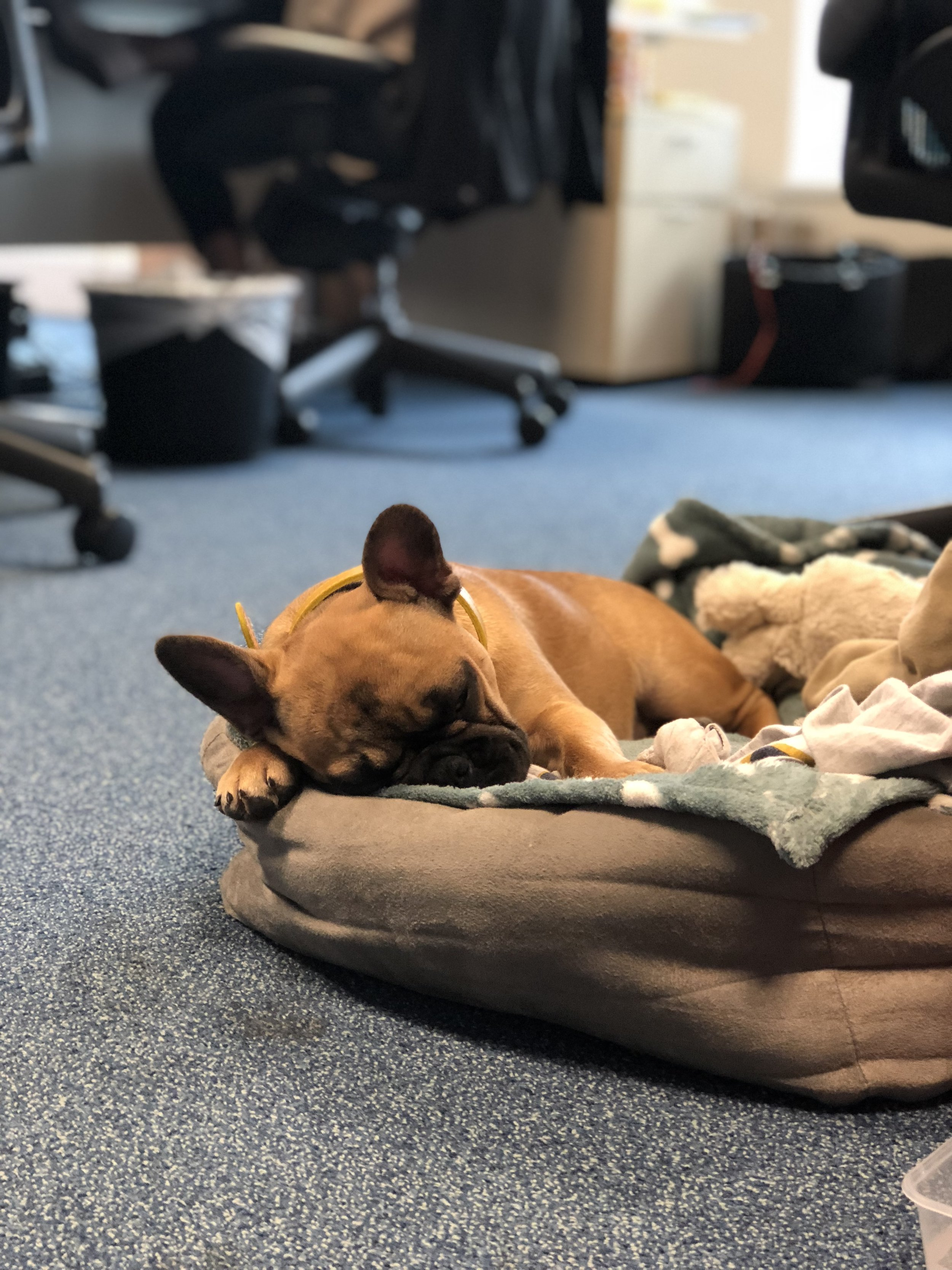 We have a new addition to the Oakstone pooch family… Meet Tillie, belonging to Consultant, Jodie Webster!