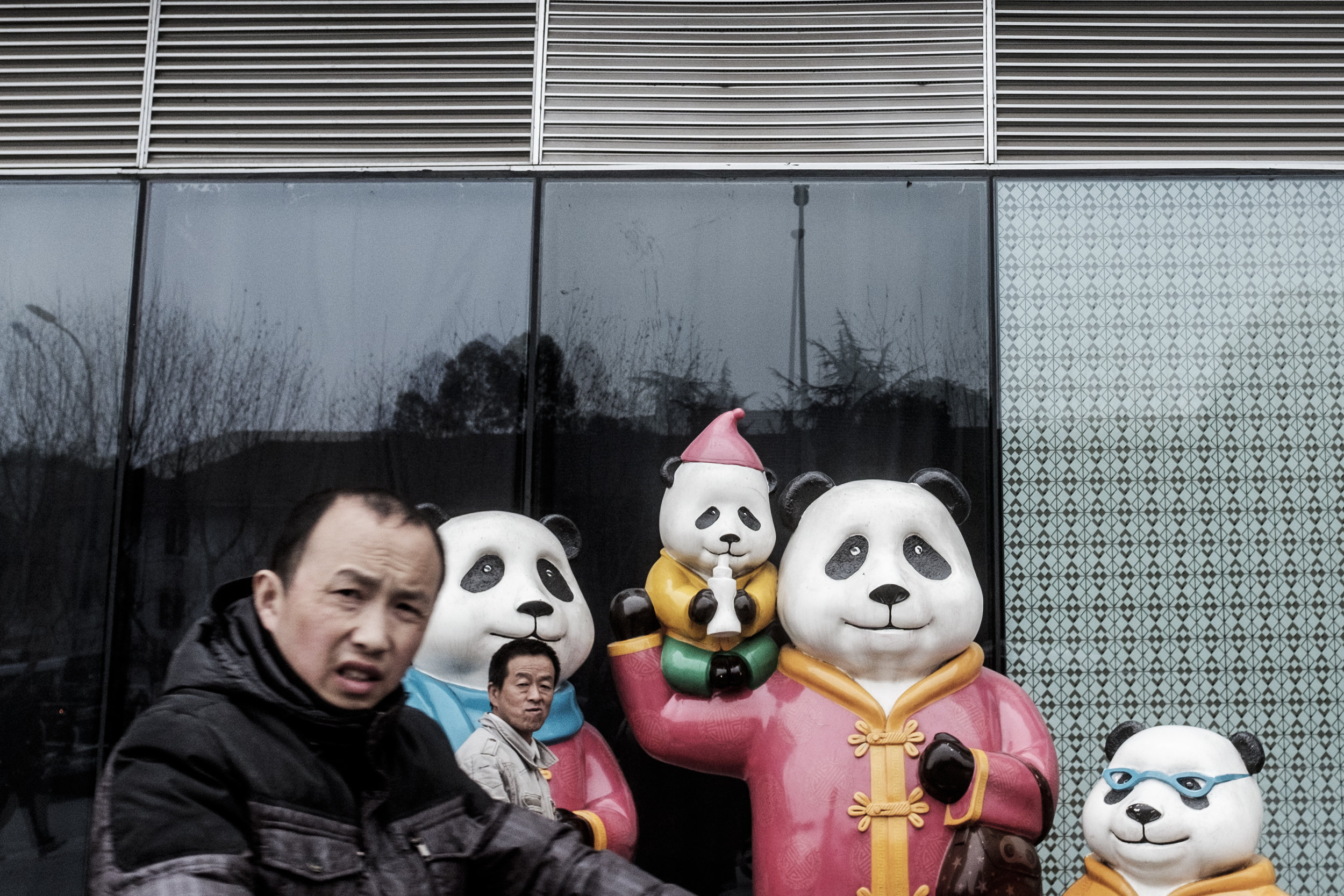 In 1979, China introduced the controversial one-child policy to curb its large population growth. As it was traditionally wanted to have boys, the law contributed to a large gender imbalance. The law was officially removed in 2015. A Panda can get around seven offspring throughout its lifetime. Female pandas are fertilel two to three days in a year. Something that makes it incredibly difficult to get Pandas to reproduce. The first panda born in captivity was Ming Ming in 1963.