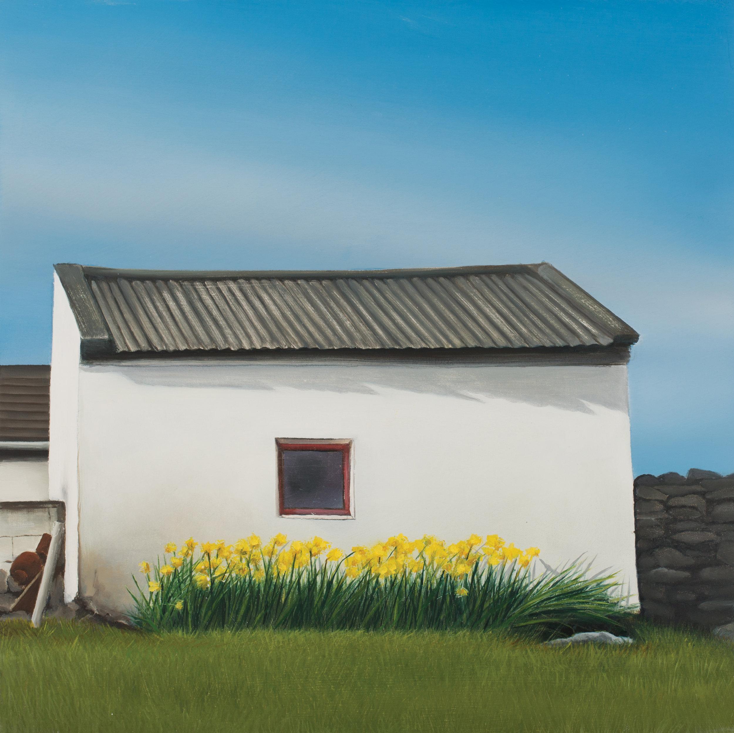 Daffodils, Co. Clare