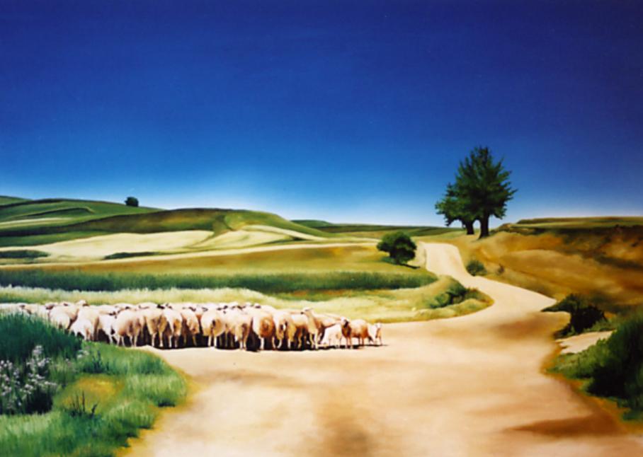 Sheep Gathered, Plains of Leon