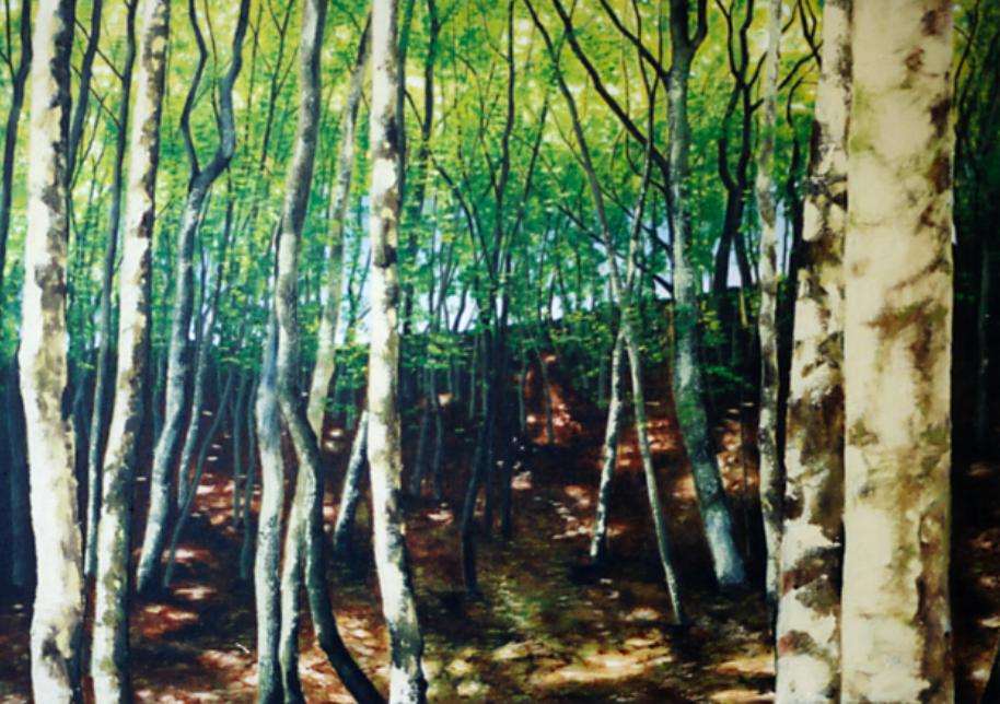 Sunlit Birch Forrest