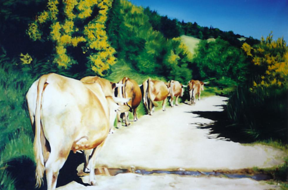 Cows on Path Through Gallcia