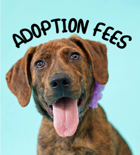 Adoption Fees Graphic.png