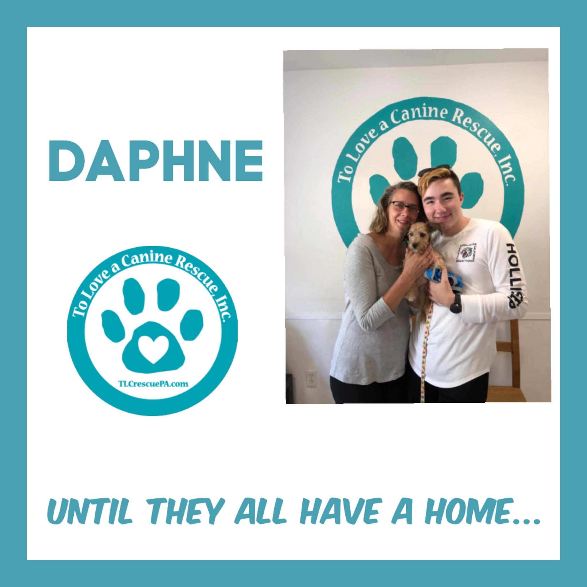 Daphne.PNG