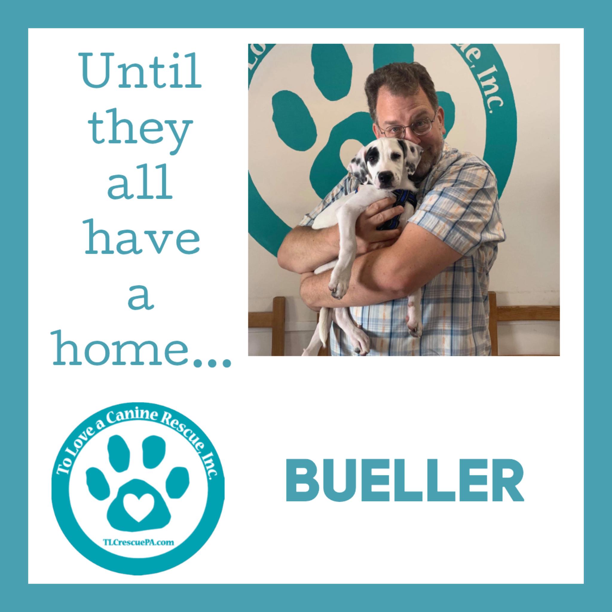 Bueller.PNG