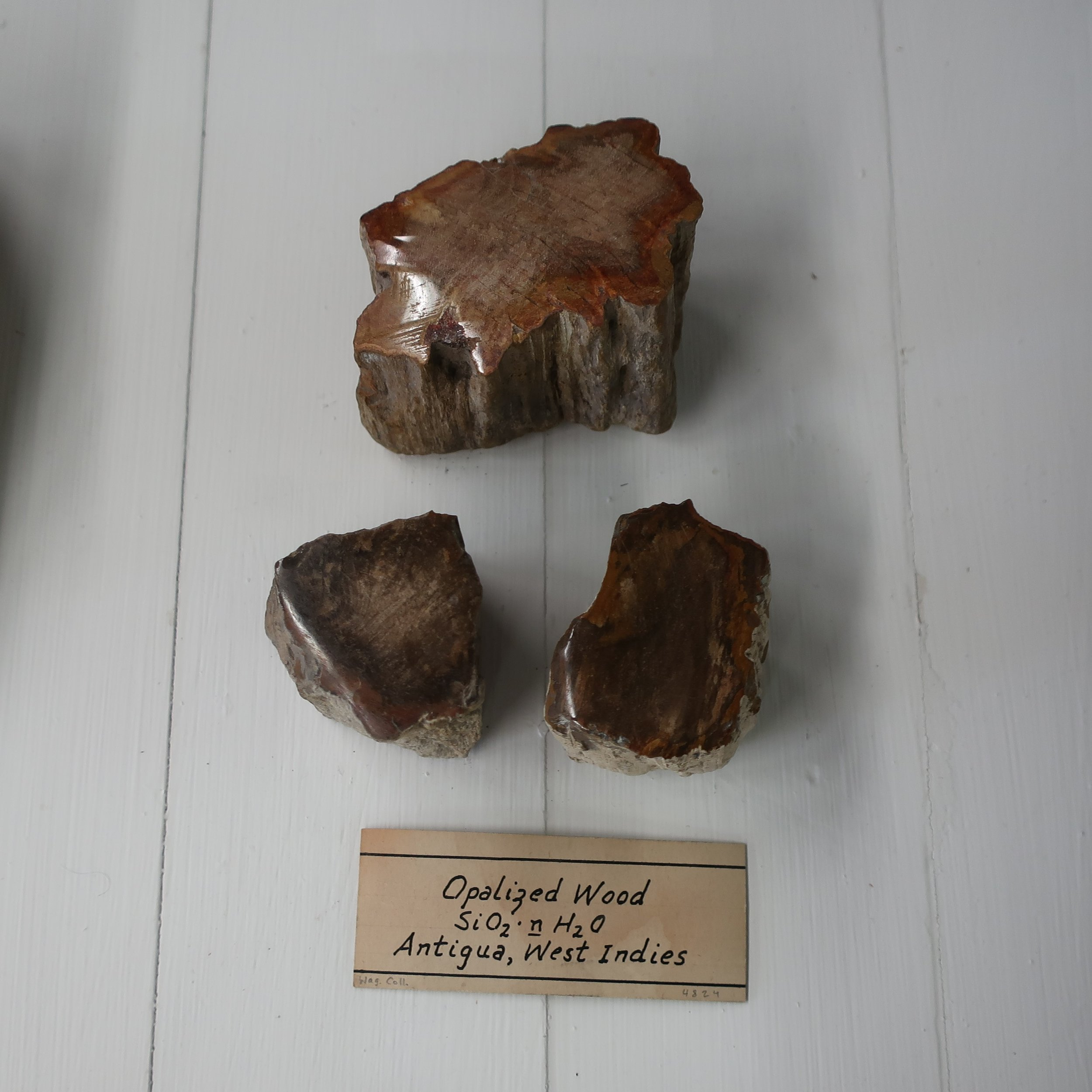 """Wood Opal  is remarkable for its ligneous appearance. It presents a variety of grey, brown, and black, and in fracture, translucency, and lustre, does not materially differ from semi-opal, altho' somewhat harder. It occurs occasionally, forming large trees, in the pumice conglomerates of Hungary."""