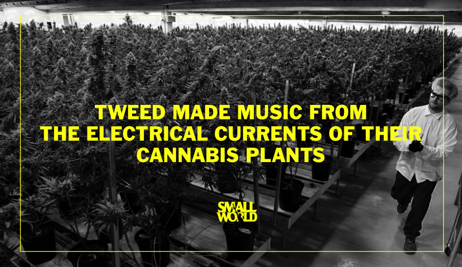 Smallworld-LIVE-Ottawa-events-cannabis-tweed-made-music-from-their-plants.jpg