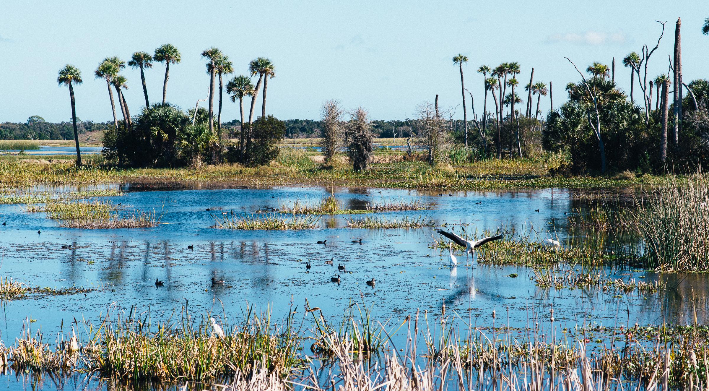 1-13-19_ORL-Wetlands-024.jpg