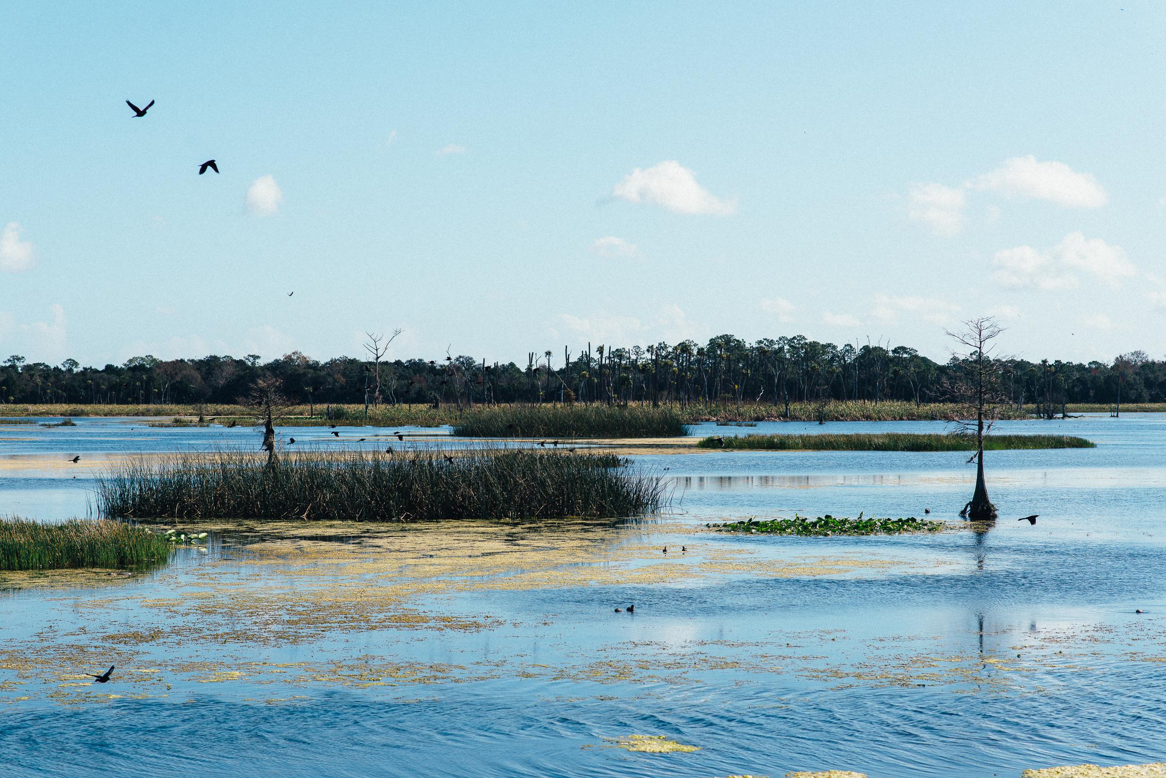 1-13-19_ORL-Wetlands-045.jpg