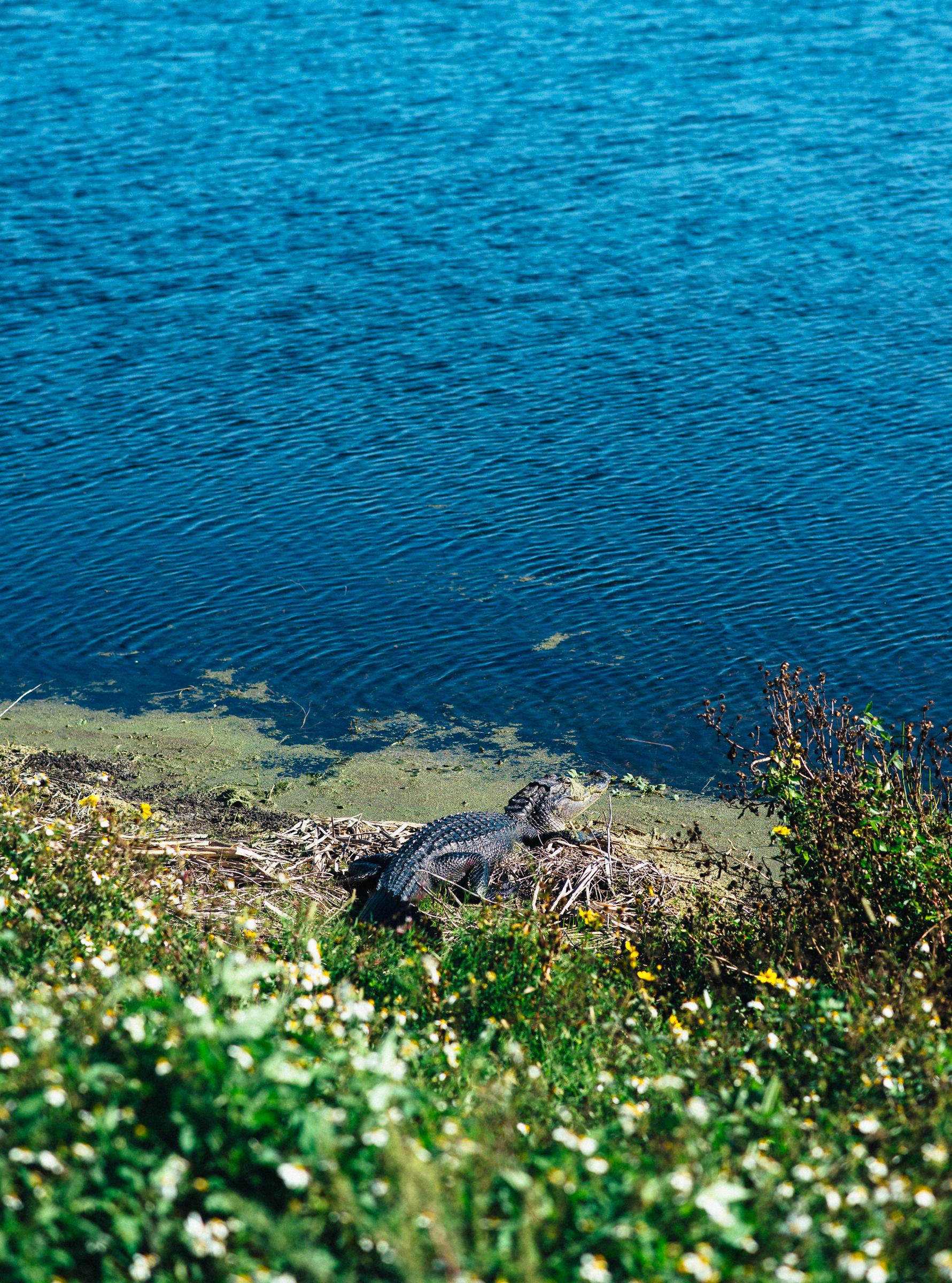 1-13-19_ORL-Wetlands-054.jpg