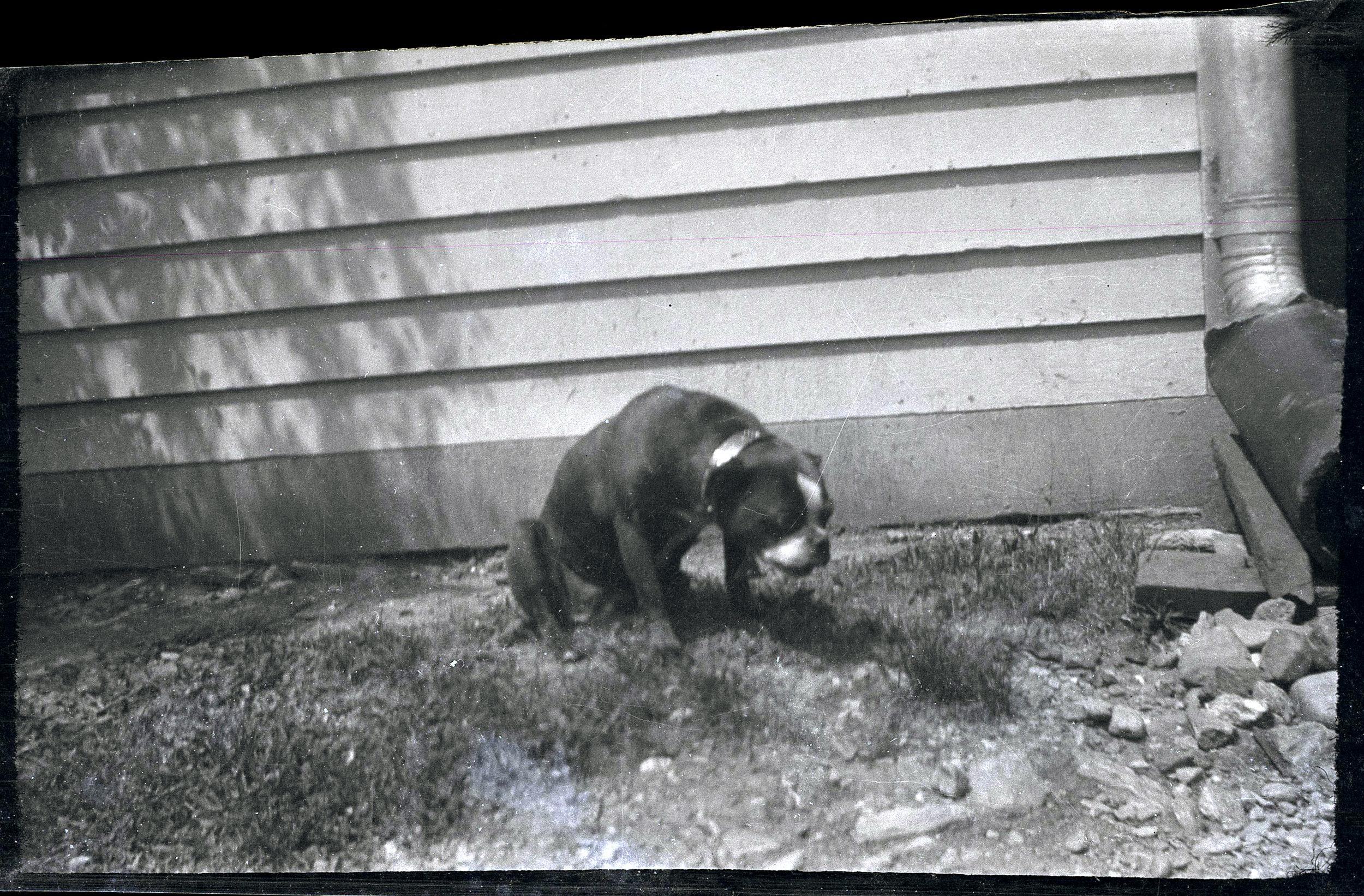 Unknown dog