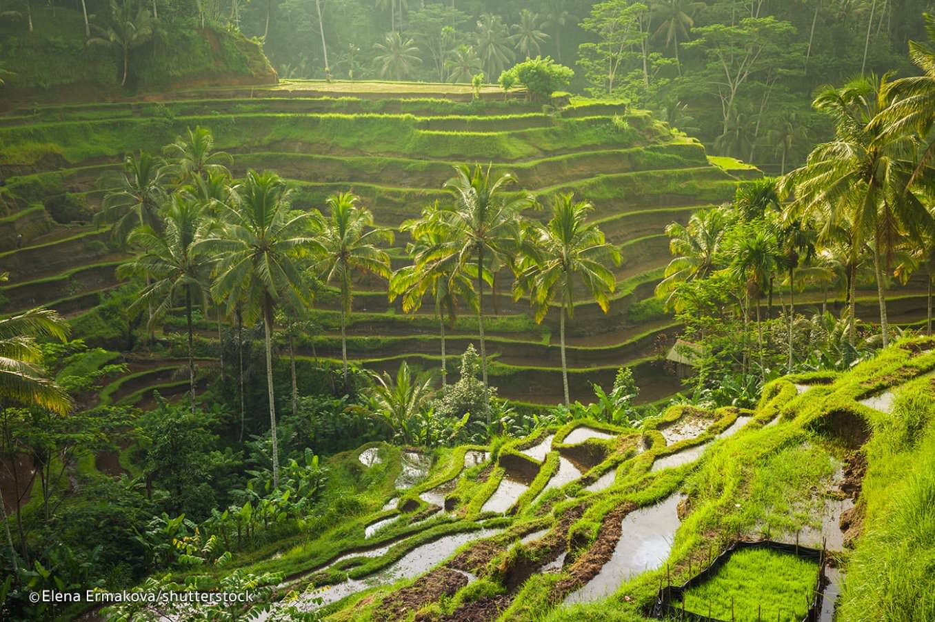 Bali-Indonesia.com -