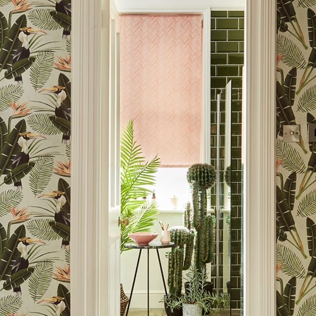 🌿Dreaming of long summer☀️🌸evenings and sun drench days spent outdoors!? With a weekend of rain☔️ who wouldn't be?! Shop soon our Pink Chevron Patterned Roller blind & @mindtgap wallpaper #summerinterior #interiorinspo #interiordesign #pink #rollerblinds #madeinengland #birdsofparadise #leafwallpaper #dailydecordose #dailydecordetail #bathroomdesign #bathroomdecor #saturdayvibes