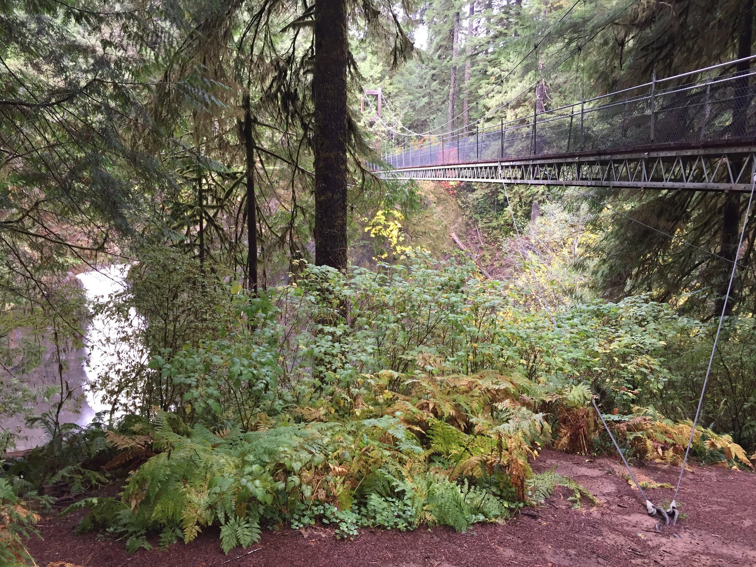Drift Creek Falls Trail.jpg