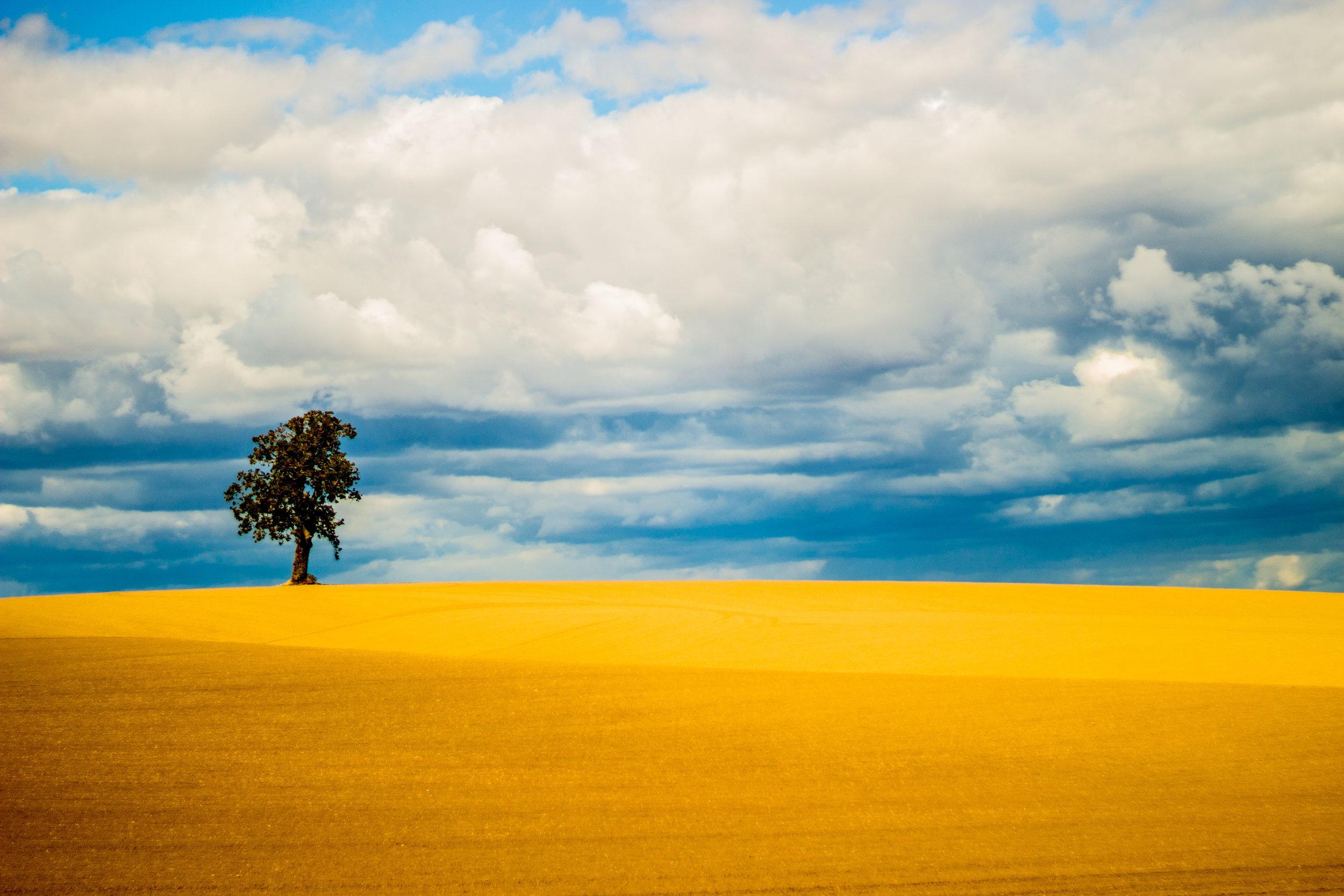 Dallas Oak Tree.jpg