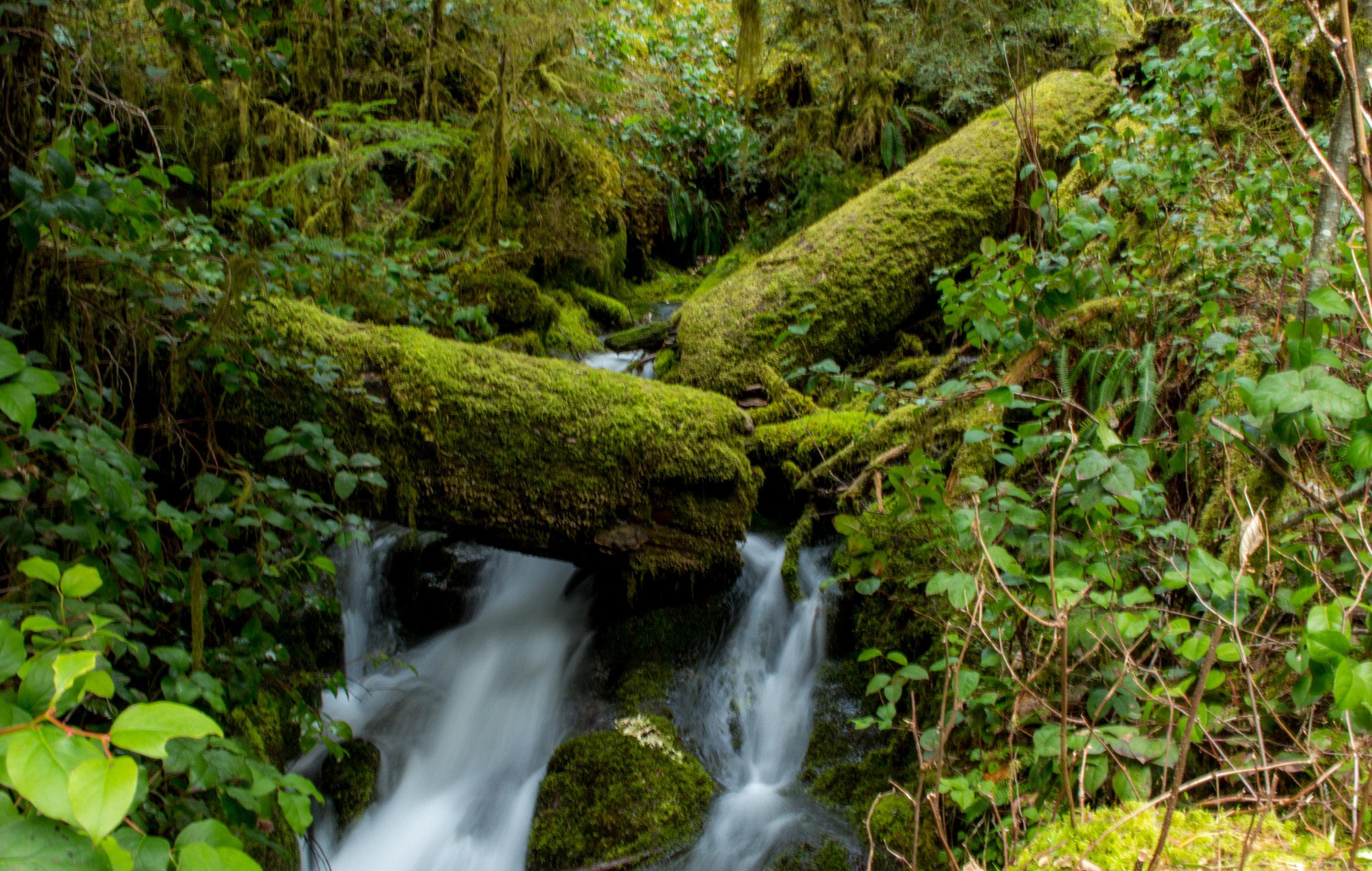 Opal Creek Wilderness.jpg
