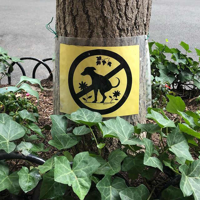There are almost 90,000 domesticated #dogs in #NYC. We love our #CanineCompanions here, we just ask that you be sure to #CurbYourDog and keep them out of the #flower and ivy beds when taking them out. That's taken very seriously on the beautiful, tree lined #streets of #GreenwichVillage. . . . . . . . . #westvillage #westvillagenyc #westvillagelife #dogsofinstagram #dogstagram #dogs_of_instagram #poop #pooping #poopy #dogpoop #dogsofnyc #nycdogs #newyorkersbelike #nyclife