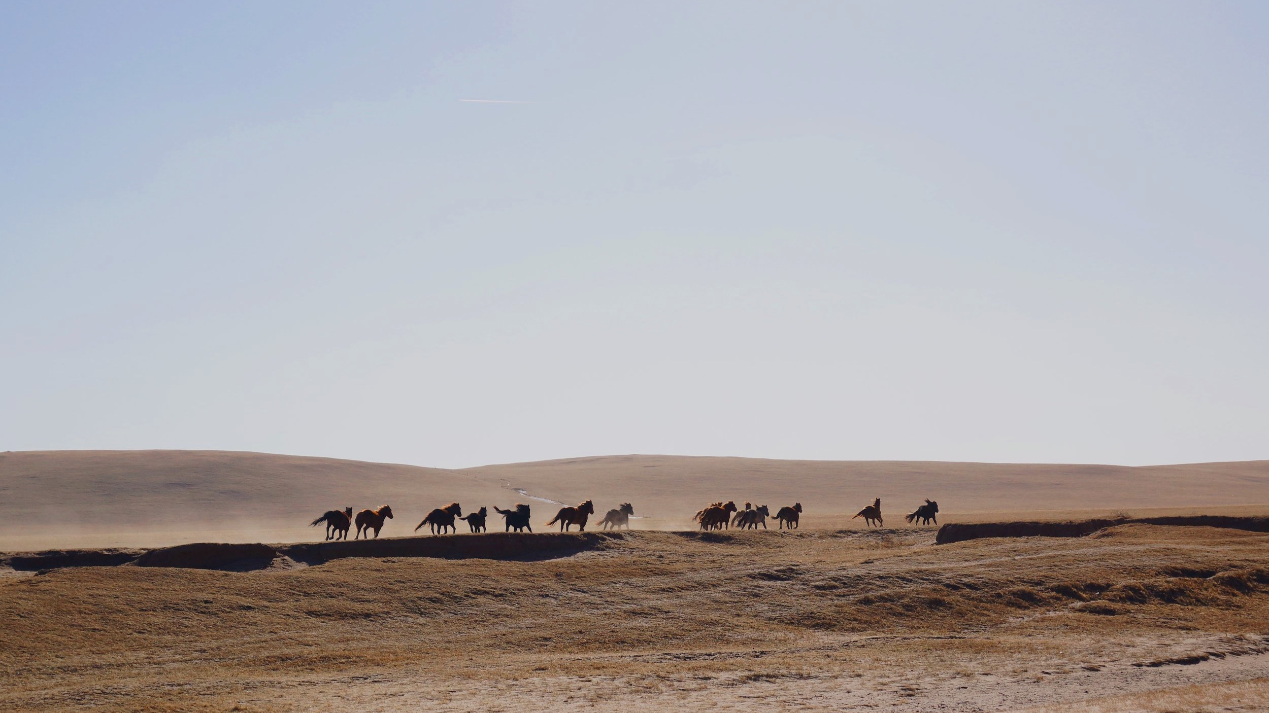 mongolia - into the wild