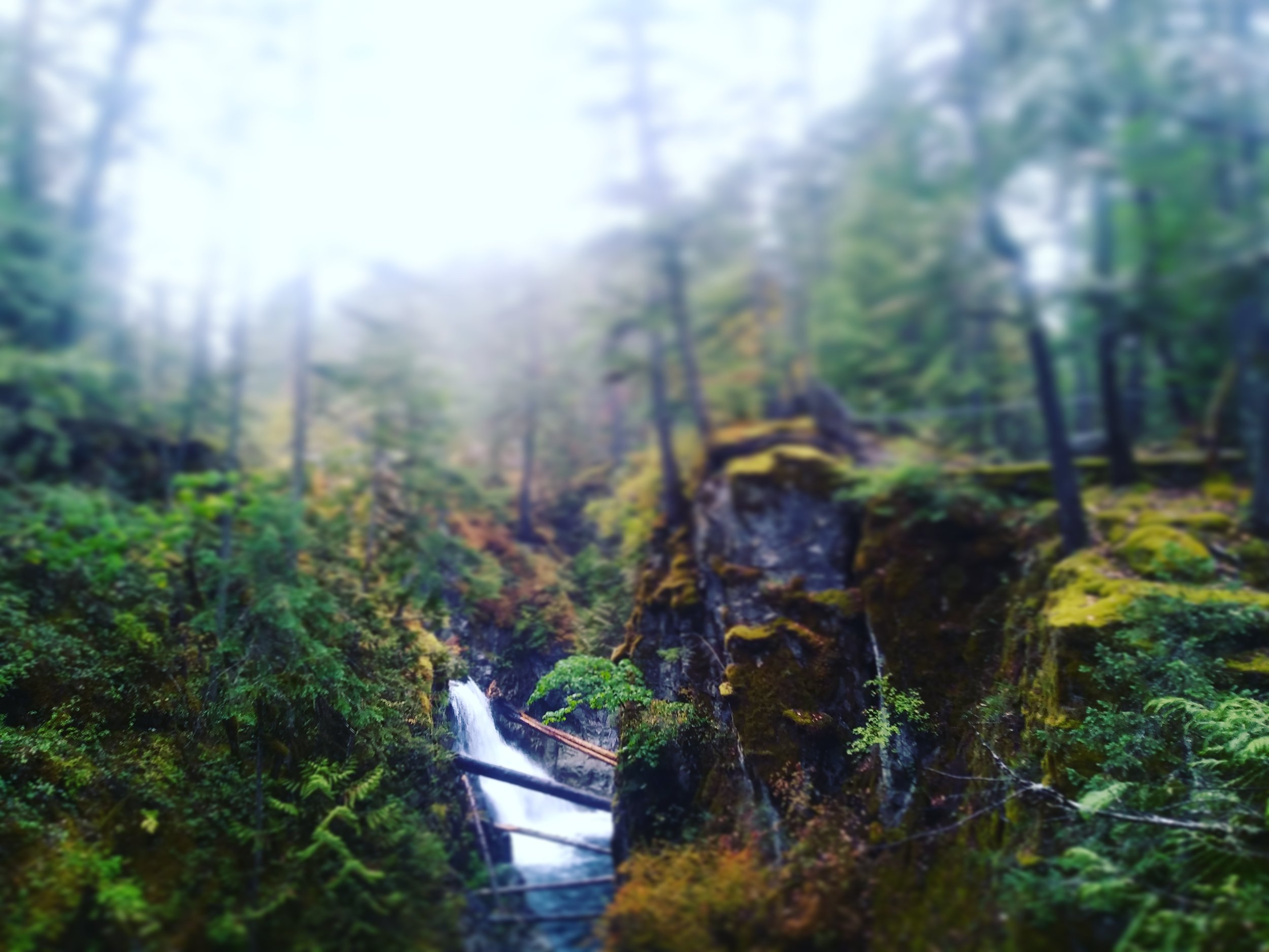 Little Qualicum Falls - Before the van broke down