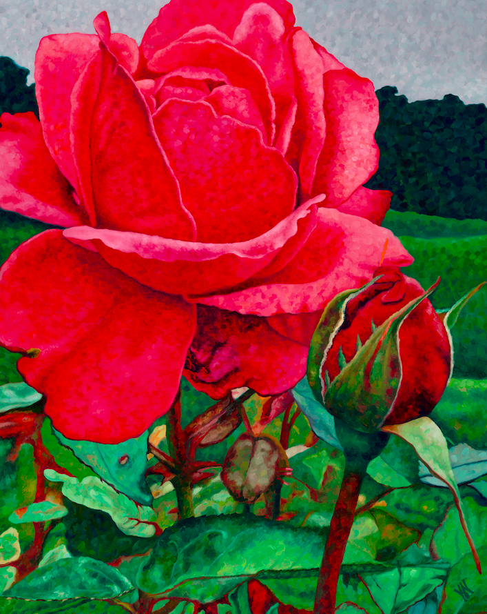 """Rose #3  Oil on wrapped canvas 30"""" h x 24"""" w x 1.5"""" d  Available at Lizzards Gallery in Duluth, MN"""
