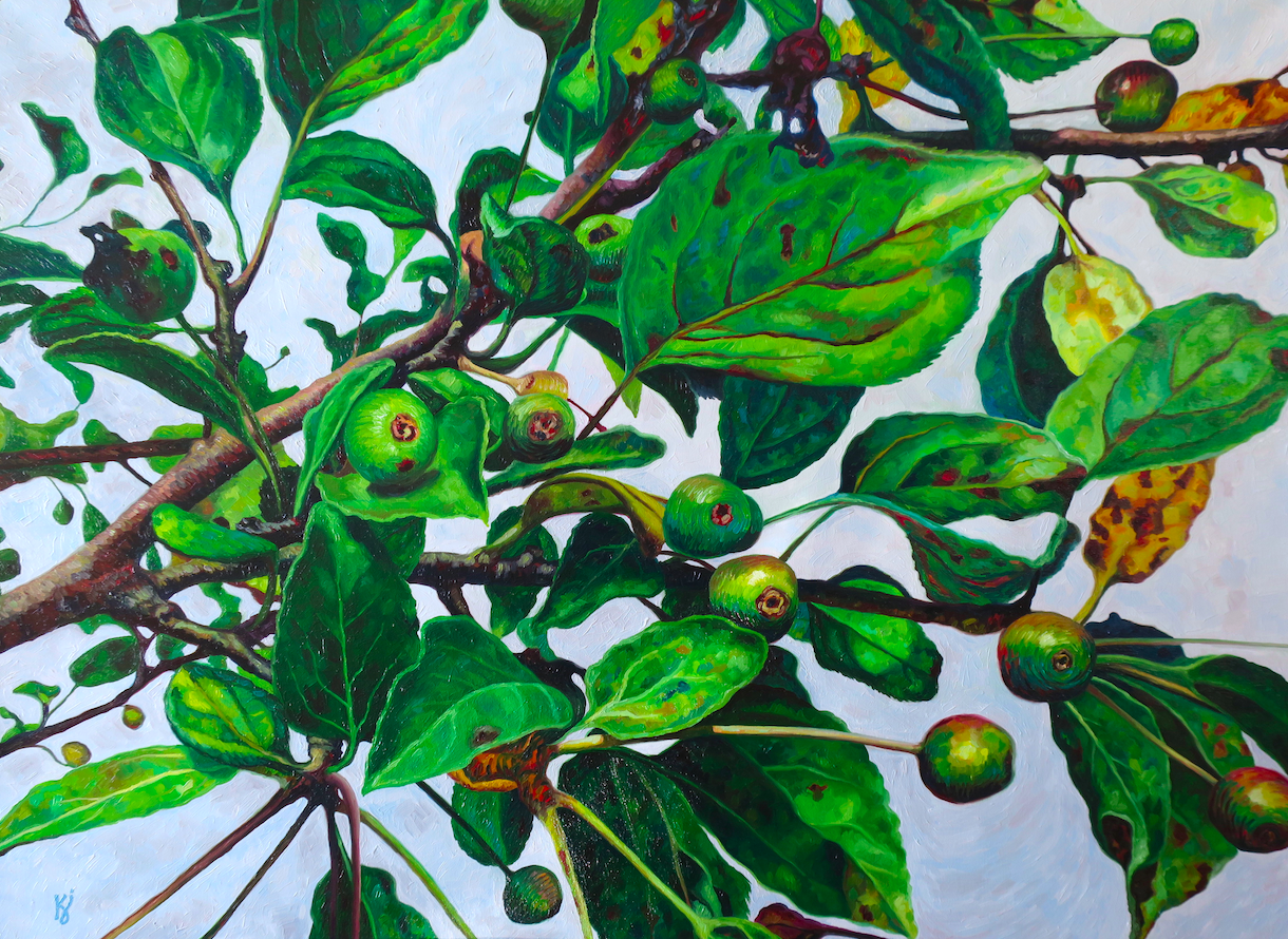 """Unripe Crab Apples IV  Oil on wrapped canvas  30"""" h x 40"""" w x 1.5"""" d  Contact artist to purchase"""