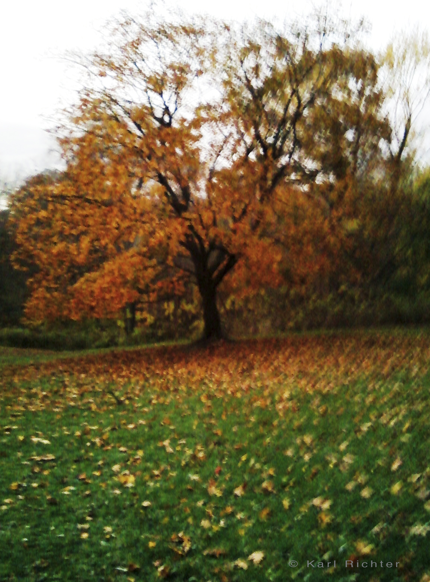autumn tree.jpg