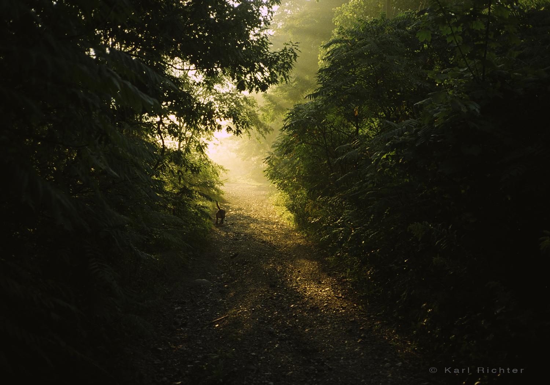 Crothers Wood sunrise.jpg