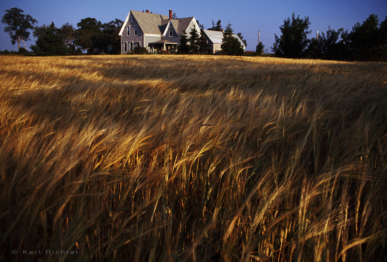 PEI farm & wheat field>.jpg