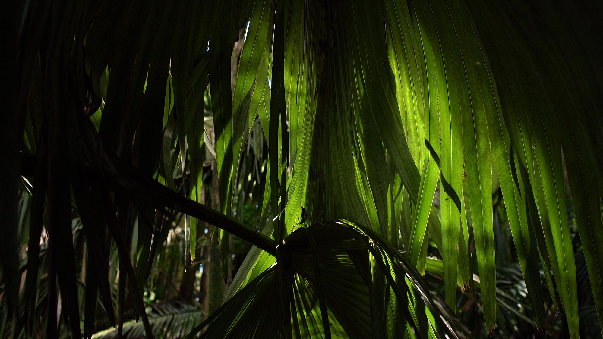 11_palm.jpg