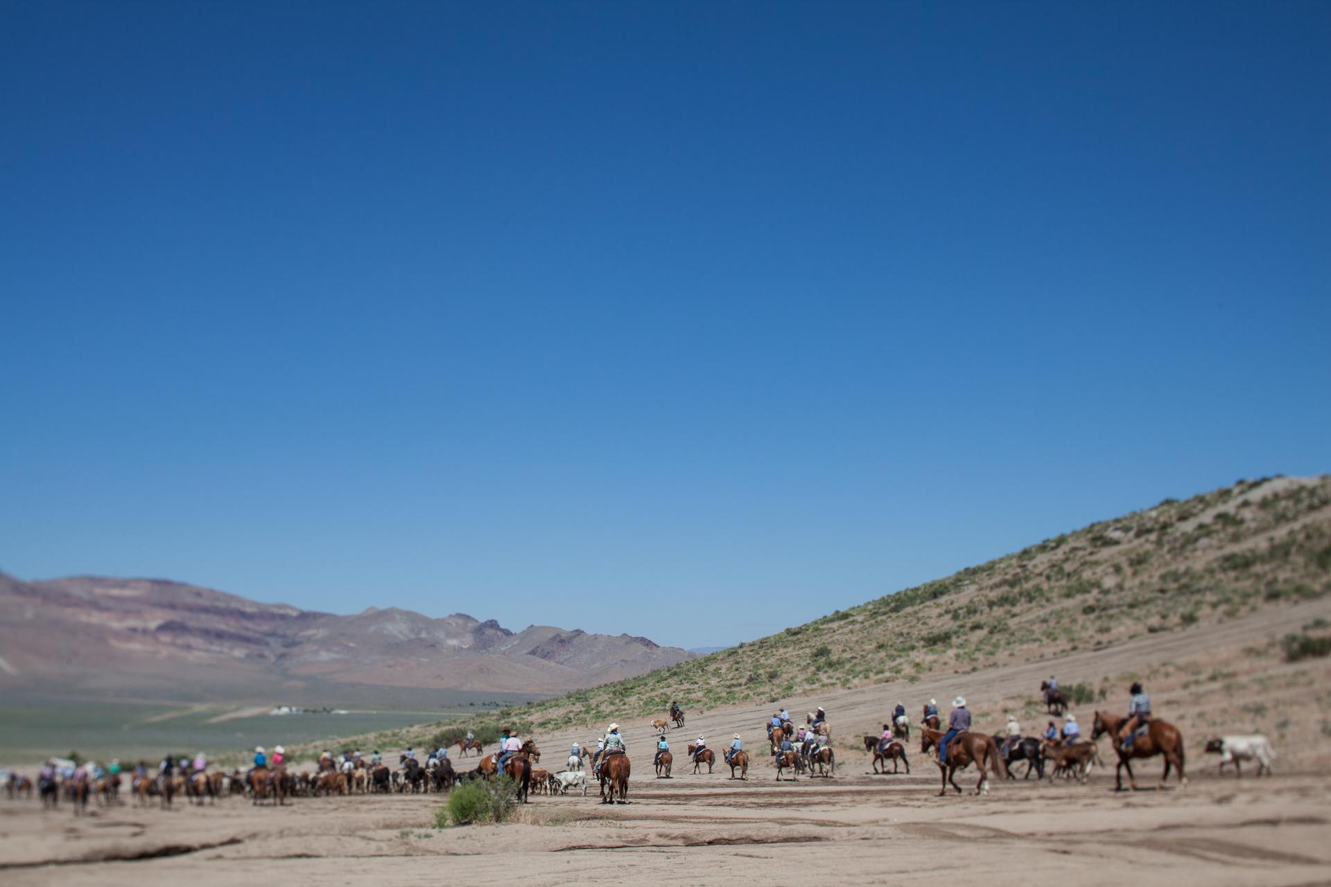 Cattle Drive 5.jpg