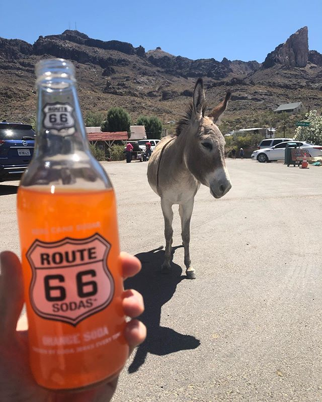Just chilling with the locals on Route 66 •  #fundraising #alzheimers #route66 #charity #justgiving #teamARUK #fizzy #fs1e #yamaha @alzheimersresearchuk