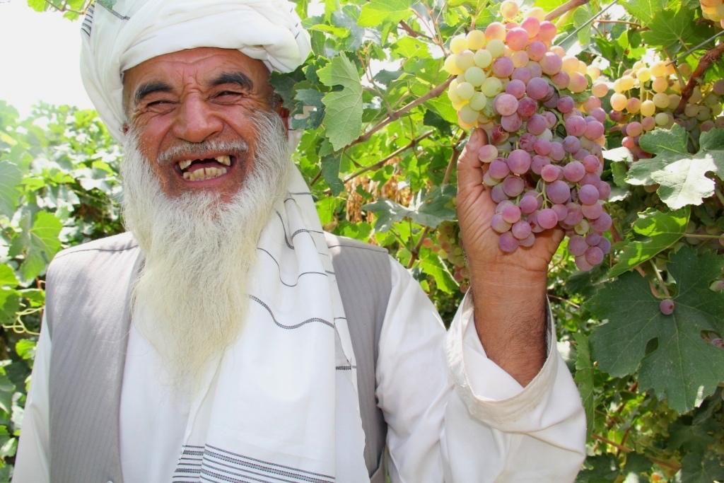 Roots-of-Peace-Afghanistan-Farmer-Grapes-Vineyard-Smile-ROP.jpg