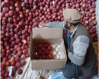 Cool Rooms Heat up prices for farmers -