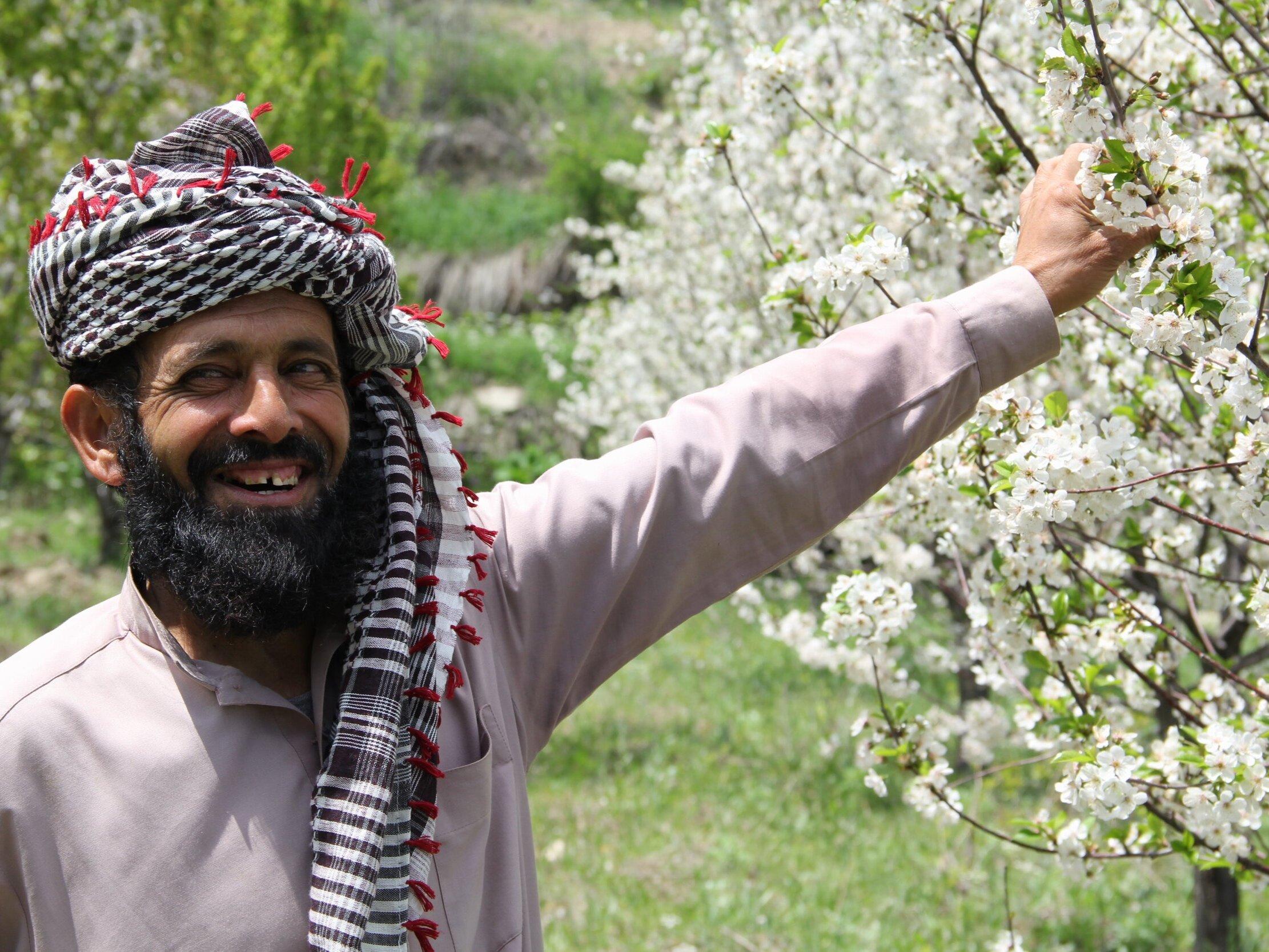 Happy-Afghan-Farmer-Orchard-Tree-Flowers-Afghanistan-Roots-of-Peace-ROP.jpg