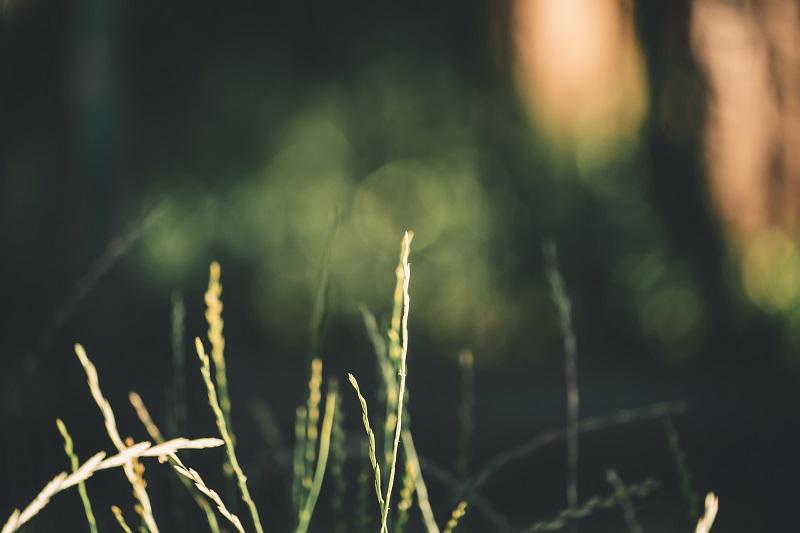 meditate-like-a-man-plants.jpg