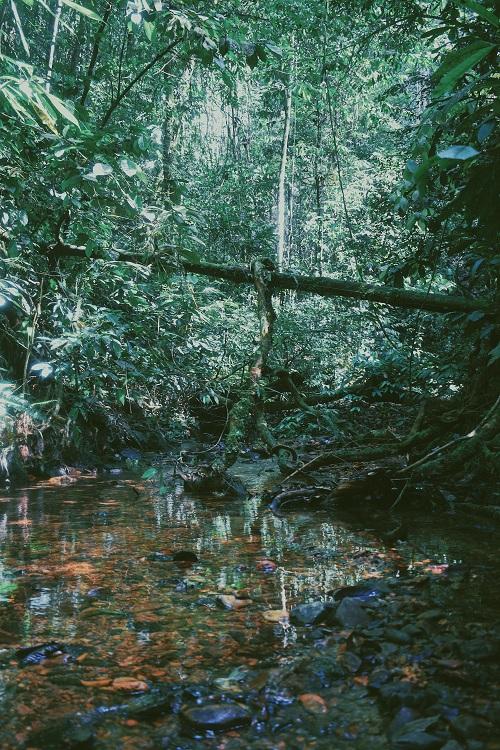 1Bukit-Lawang-River-Crossing.jpg
