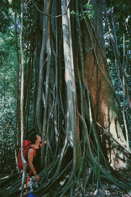 1Bukit-Lawang-Tree2.jpg