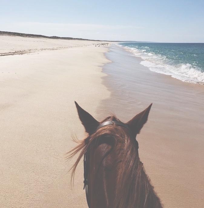 cavalo_faded2.jpeg