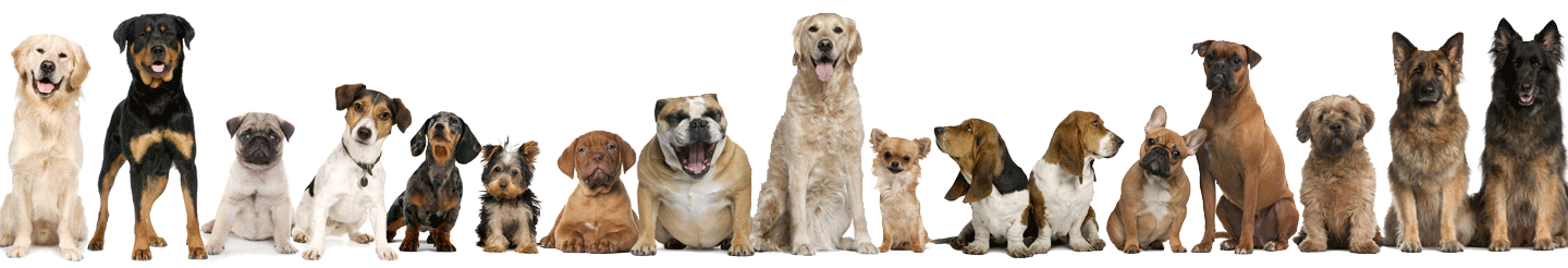 dogs-separator.png