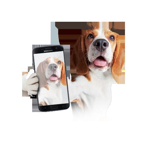 cachorro_slide_3.png