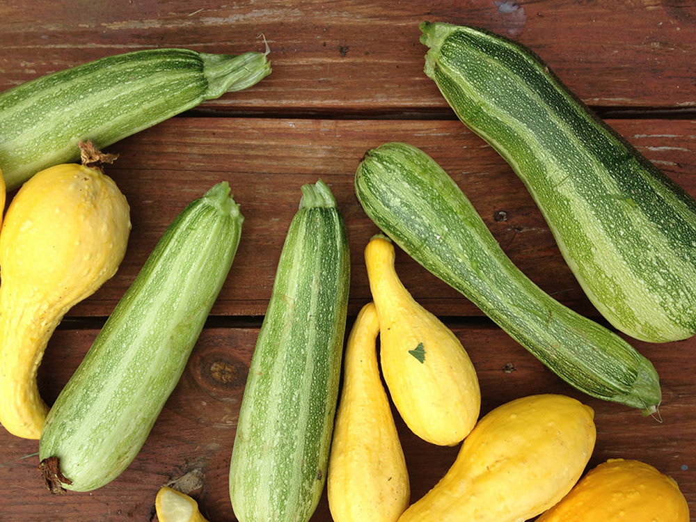 crookneck squash and cocozelle zucchini.jpg