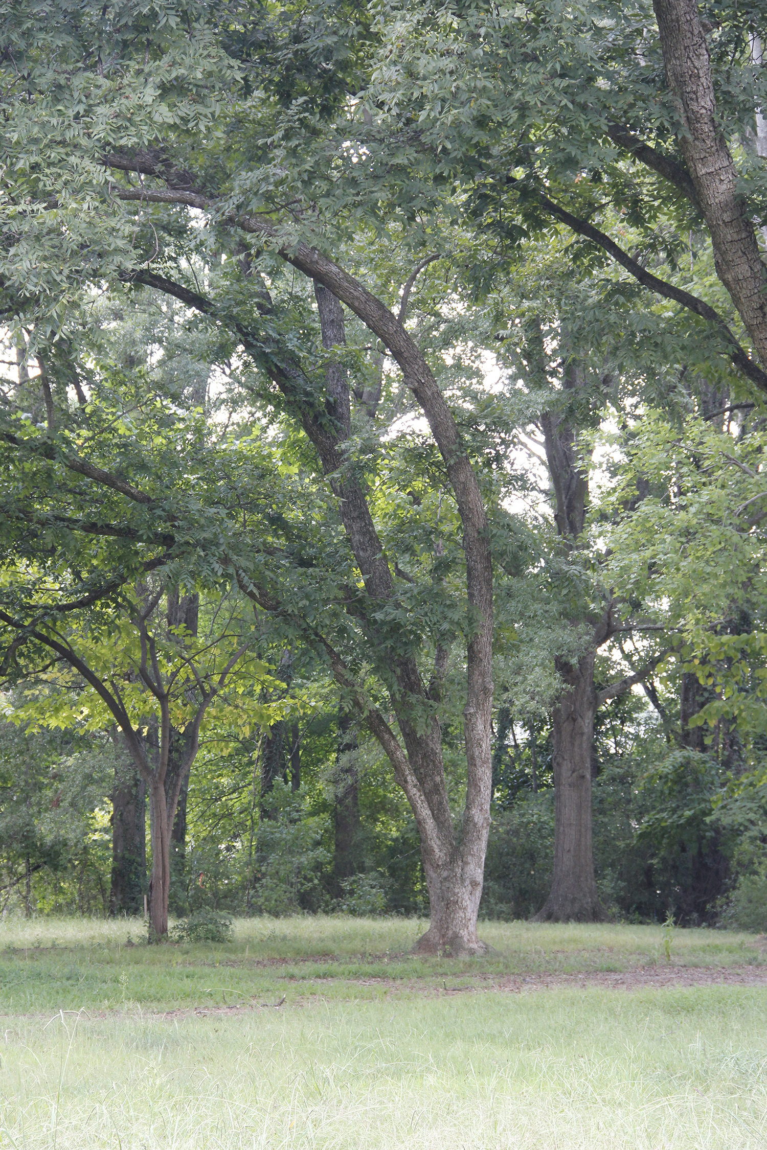 Older trees are an interest point for the Town of Matthews.   News Above Town:  The heat is on as the temps climb back to the upper 80s. Expect some clouds.   News Around Town:  A local moms group rallied around Tammy Panovich as her husband, Brad, was kept at work (WCNC) watching Florence creep in. In an effort to provide meals to the station crew, the moms, led by Matthews mom Amanda McGrath, raised $1325 in under a day. The idea was so popular the  Fanovich tee shirt  was born. In two weeks 3,100 shirts were sold and $37,001.05 has been raised for charities aiding in storm relief.