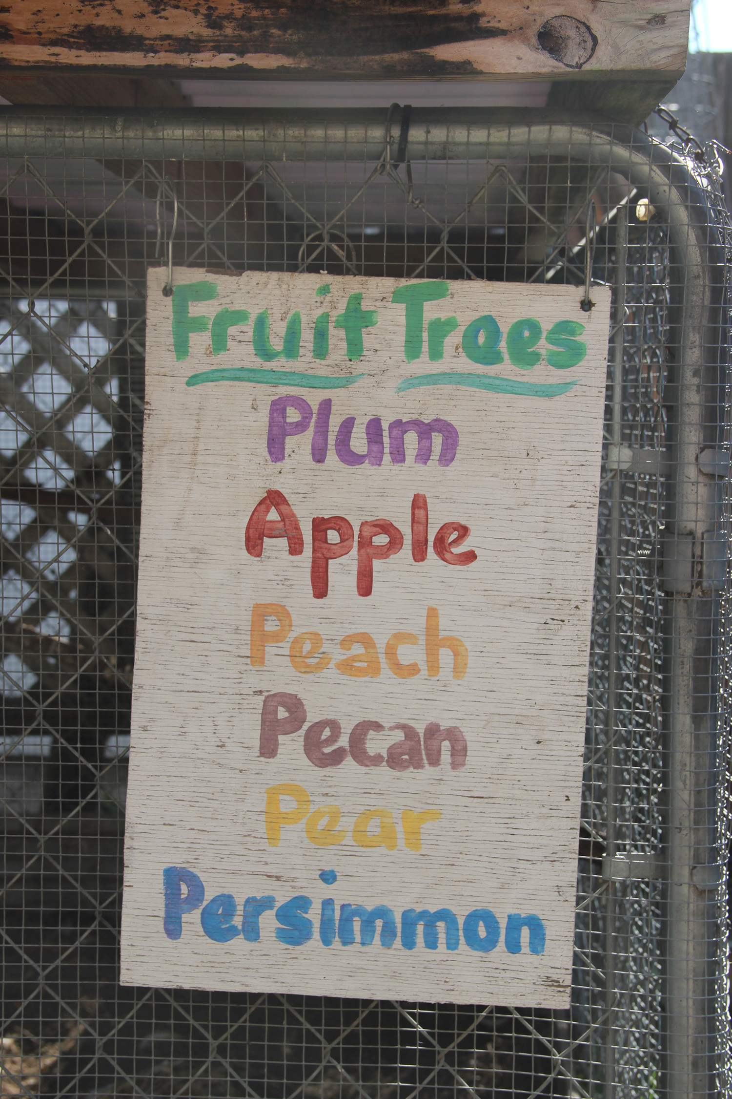 fruit tree 5.jpg